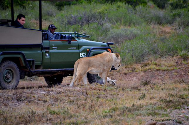 new lion game reserve