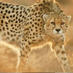 More about DANIEL CHEETAH PROJECT